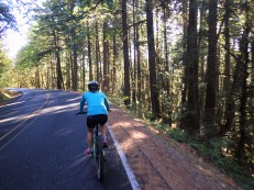 the ride starts as a steady climb up quiet roads that climb north of Oakridge.