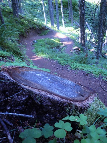 From the summit, it's almost all downhill back to Oakridge, all on flowy singletrack.