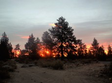 No the trees aren't on fire, the sun is just going a little crazy.