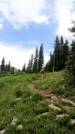 Some of the awesome descent from Blackhawk Pass.