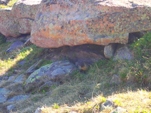 Marmots were EVERYWHERE on the trail.